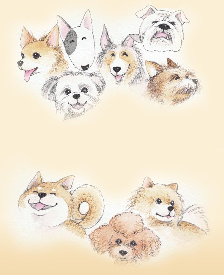 老犬の訪問介護 ペットシッターサービス